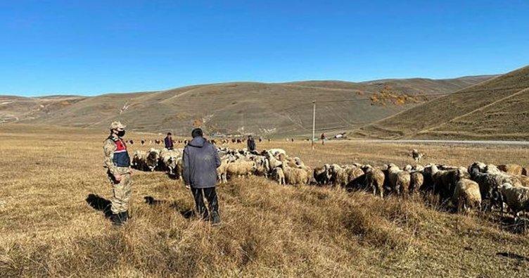 Ardahan'ın kaybolan hayvanlar drone ile bulundu