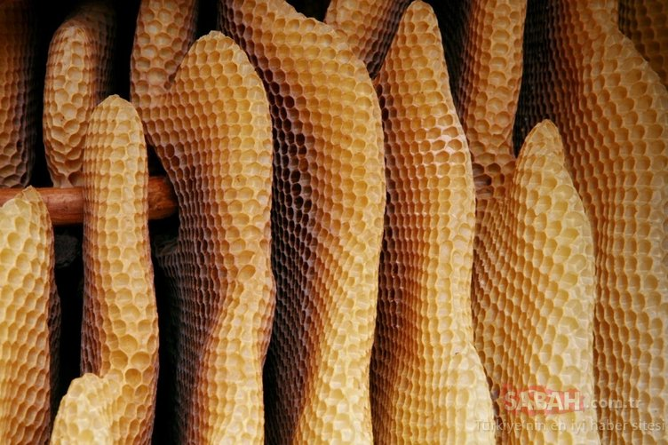 Bir damlası bile kanserle savaşması için yetiyor! İşte arı sütünün mucizevi faydaları