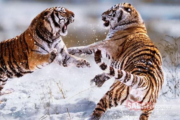 Vahşi doğanın yırtıcıları