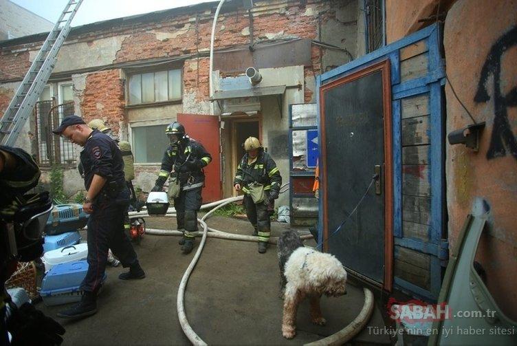 Rusya'da barınakta yangın: 300'den fazla kedi...