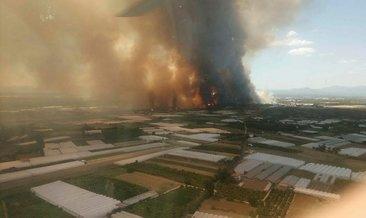 Son Dakika: Antalya'da orman yangını!