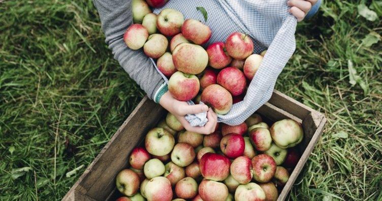 Rüyada elma görmek ne anlama gelir? Yeşil veya kırmızı elma görmek, yemek yorumu