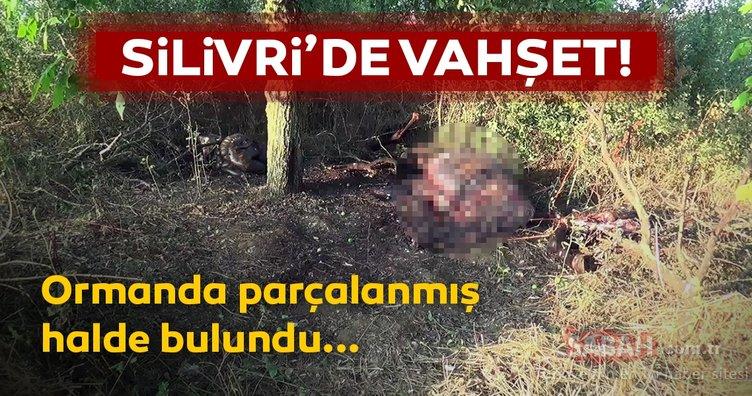 Son dakika haberi: Vahşet! Silivri ormanında parçalanmış halde bulundu