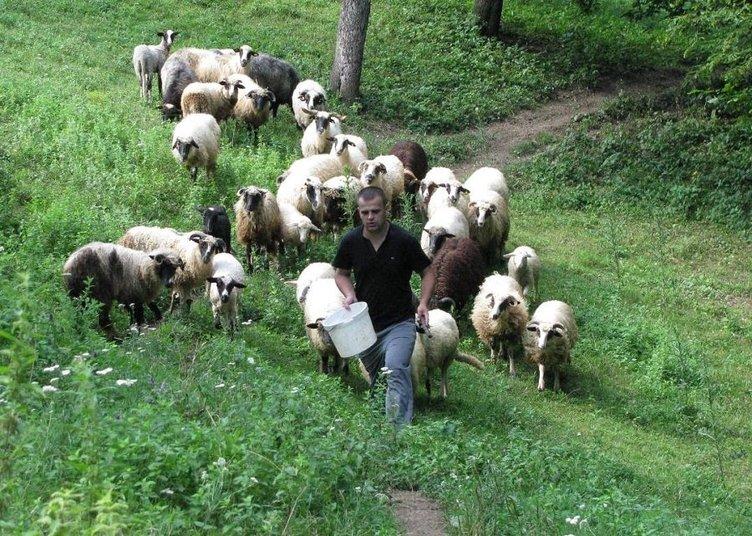 Hem doktor hem çoban