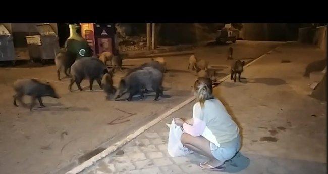 Domuzları elleriyle beslediler
