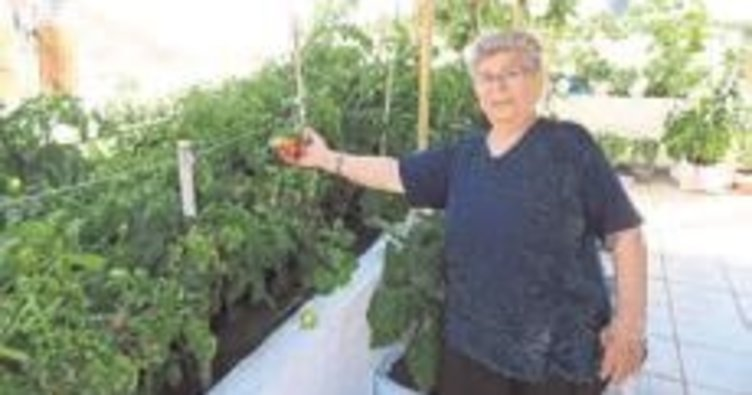 Evini organik bahçeye çevirdi