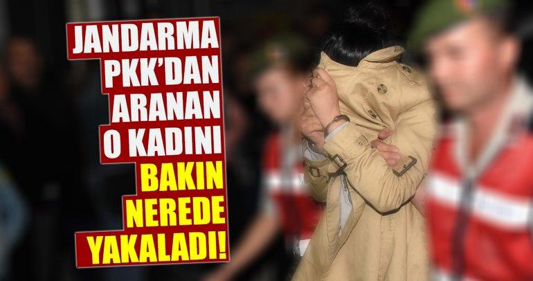 Son dakika: PKK/KCK'dan aranıyordu! Bakın nerede yakalandı!