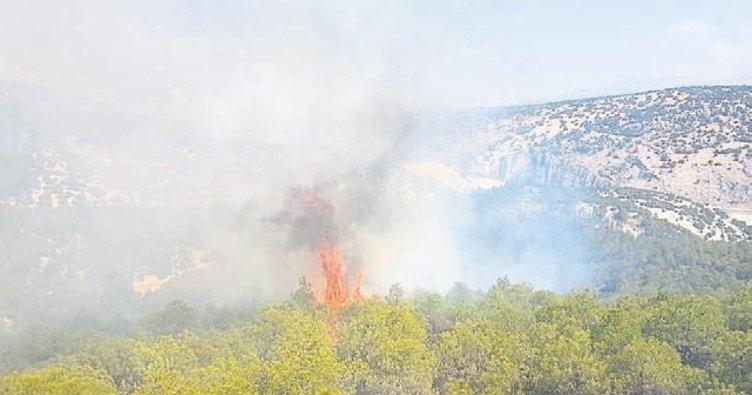 Hırsızlar ormanı acımadan yaktı