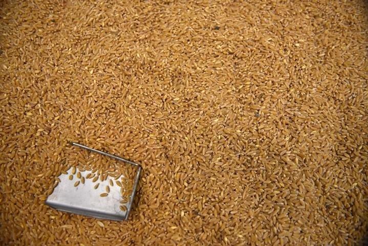 Buğdayın makarnaya uzanan serüveni