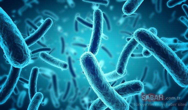 Bilim dünyasından flaş açıklama! Tatlı suda yeni bir virüs grubu keşfedildi! Yeni bir salgına neden olabilir mi?