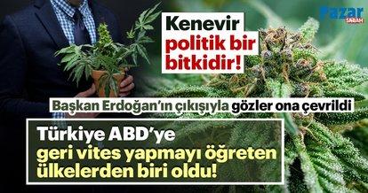 Başkan Erdoğan'ın çıkışıyla gözler bir kez daha bu politik bitki kenevire çevrildi!