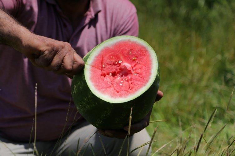 Adana karpuzunda hasat sevinci