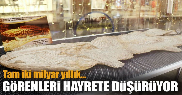 2 milyar yıllık fosil Nevşehir'de sergileniyor