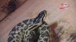 Sivaslı vatandaş yolda bulduğu yılanı yakalayıp su şişesine soktu!
