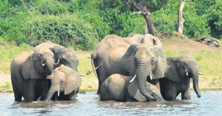 Fil katliamı
