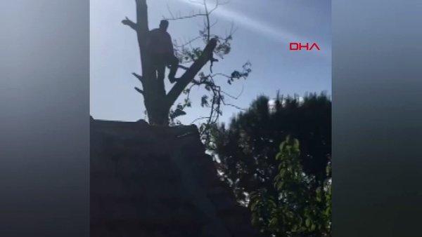 İstanbul'da fıkra gibi olay! Silivri'de budamak için çıktığı ağaçta mahsur kalan vatandaş kamerada