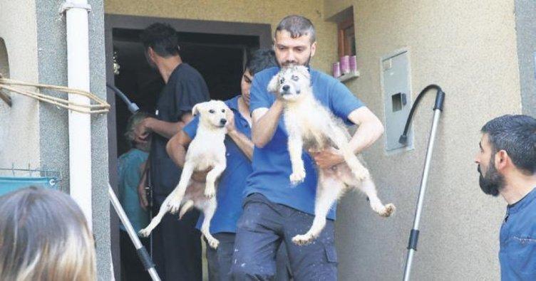 Villaya köpek operasyonu