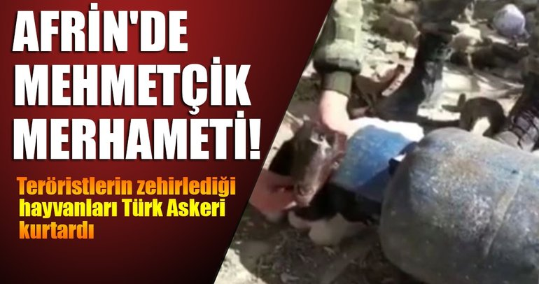 Afrin'de Mehmetçik merhameti