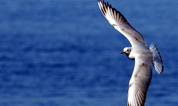 Rüyada kanat görmek ne anlama gelir?