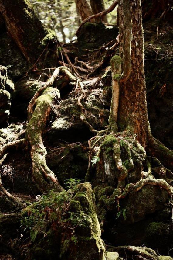 İntihar Ormanı