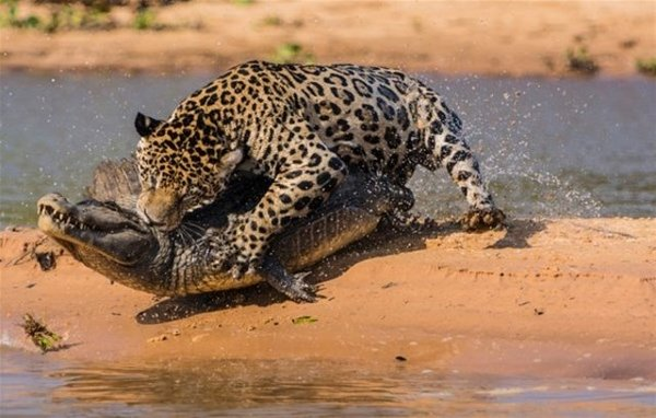 Vahşi yaşam fotoğrafları!