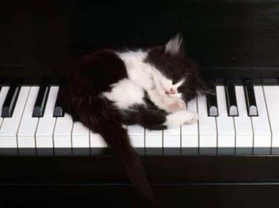 Kediler her yerde uyuyabilir
