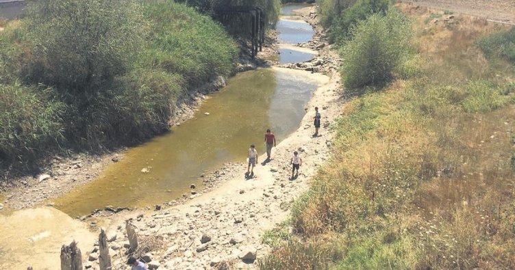 Sakarya Nehri kurudu çiftçiler zor durumda