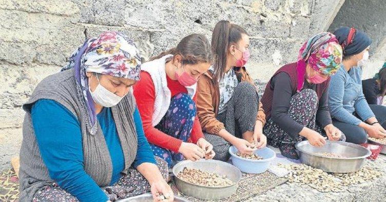 Kadınların tohumluk yerfıstığı kırma mesaisi