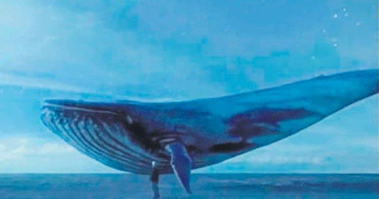 'Mavi Balina' suç sayıldı