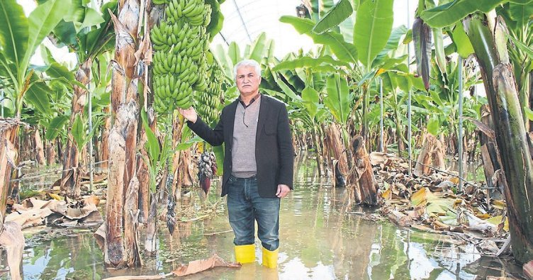 Sağanak yağış çiftçiyi vurdu