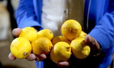 Limon fiyatlarına depoda çürüme etkisi