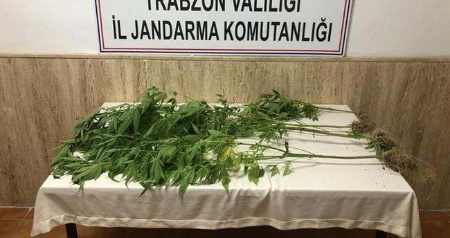 Trabzon'da 4,5 kilogram esrar ele geçirildi