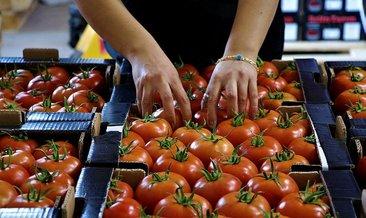 Söğüt domatesine talep artıyor #burdur