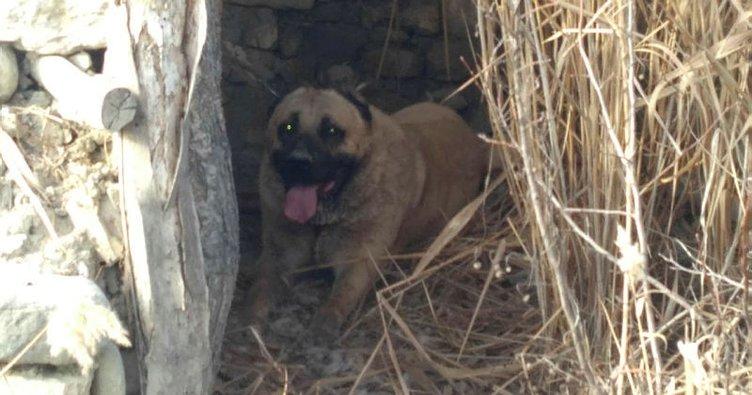 Burdur Haberleri: Barınağa konulan köpek çalındı 76