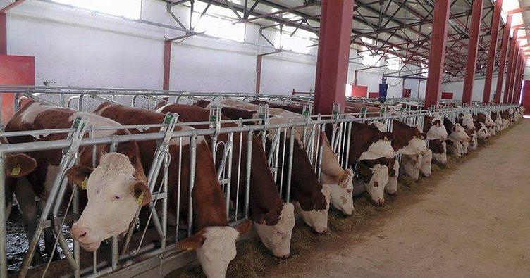 2 milyon lira devlet desteği ile modern süt üretim tesisi açtı