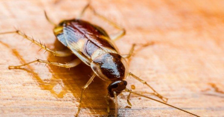 Rüyada hamam böceği görmek ne anlama gelir? Hamam böceği görmek, öldürmek, yemek yorumu…