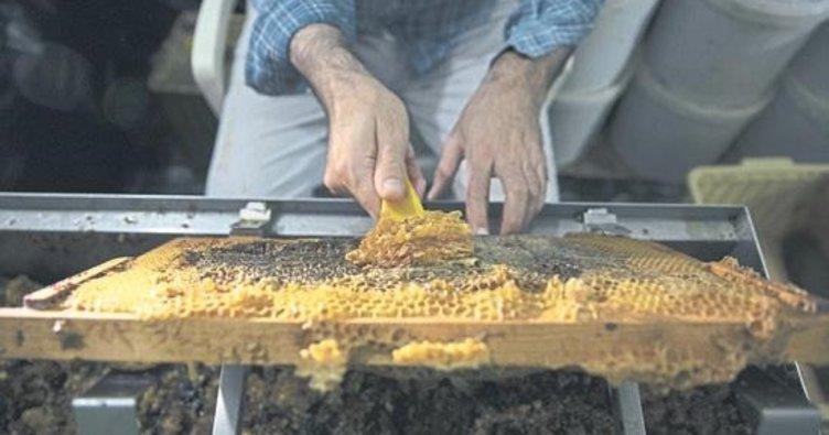 'Efe' arısından hasat dönemı başladı