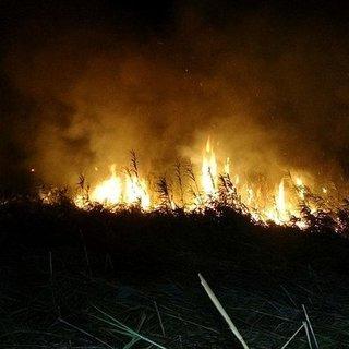 Venezuela'da yanan sazlıktan kaçan tavşanları yakalamak isteyen 9'u çocuk 11 kişi öldü
