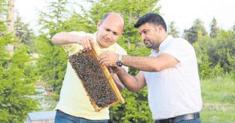 Arıların Eğriçayır yolculuğu başladı