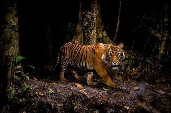Vahşi yaşam fotoğrafçılığının en iyileri