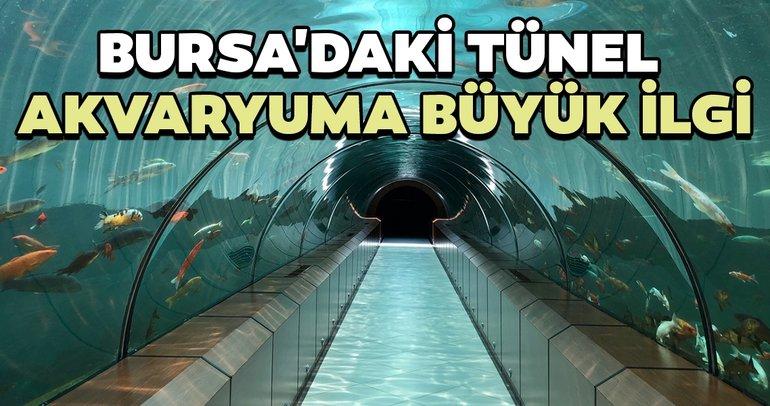 Bursa'daki tünel akvaryuma ilgi
