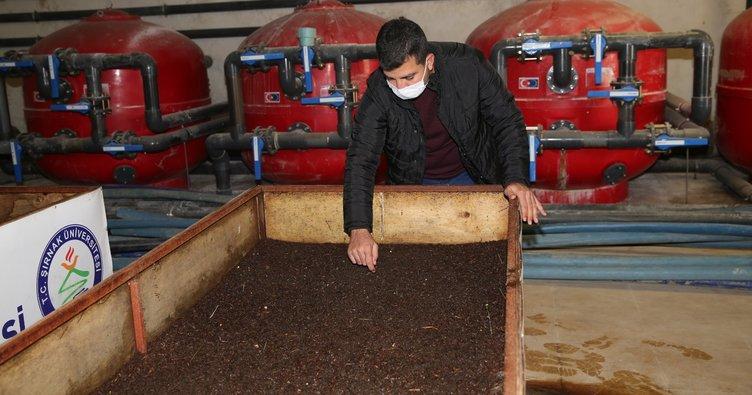 Şırnak'ta ilk defa solucan gübresi üretilmeye başlandı