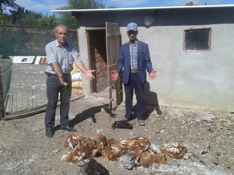 Tavuk ve hindileri telef edilen çiftlik sahibi gözyaşlarını tutamadı