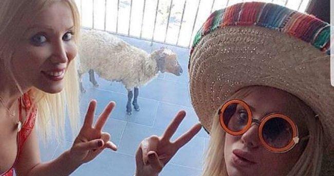 Cicişler tatile götürdükleri kurbanlık koyunu kesmekten vazgeçtiler