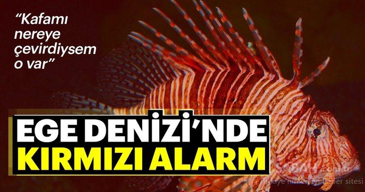 Ege Denizi'nde kırmızı alarm