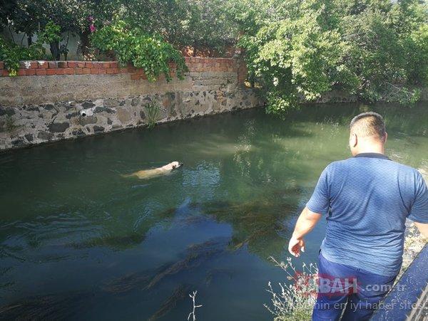 Sulama kanalına düşen köpek için seferber oldular