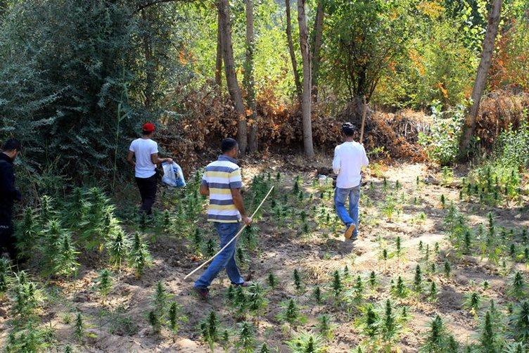 Hevsel Bahçeleri'nde kenevir operasyonu