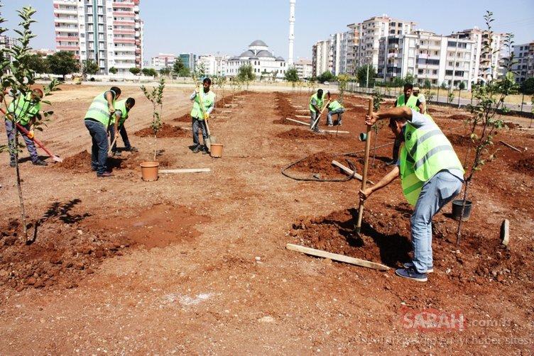 Türkiye'de bir ilk: Sitelere meyve ağacı ekme zorunluluğu getiriliyor