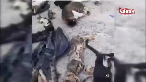 CHP'nin kedi katliamı iddiasına sosyal medyadan büyük tepki   Video