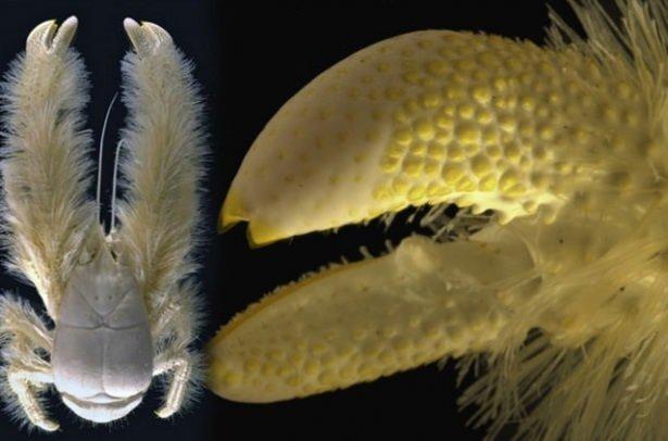 Dünya üzerindeki en ilginç canlılar